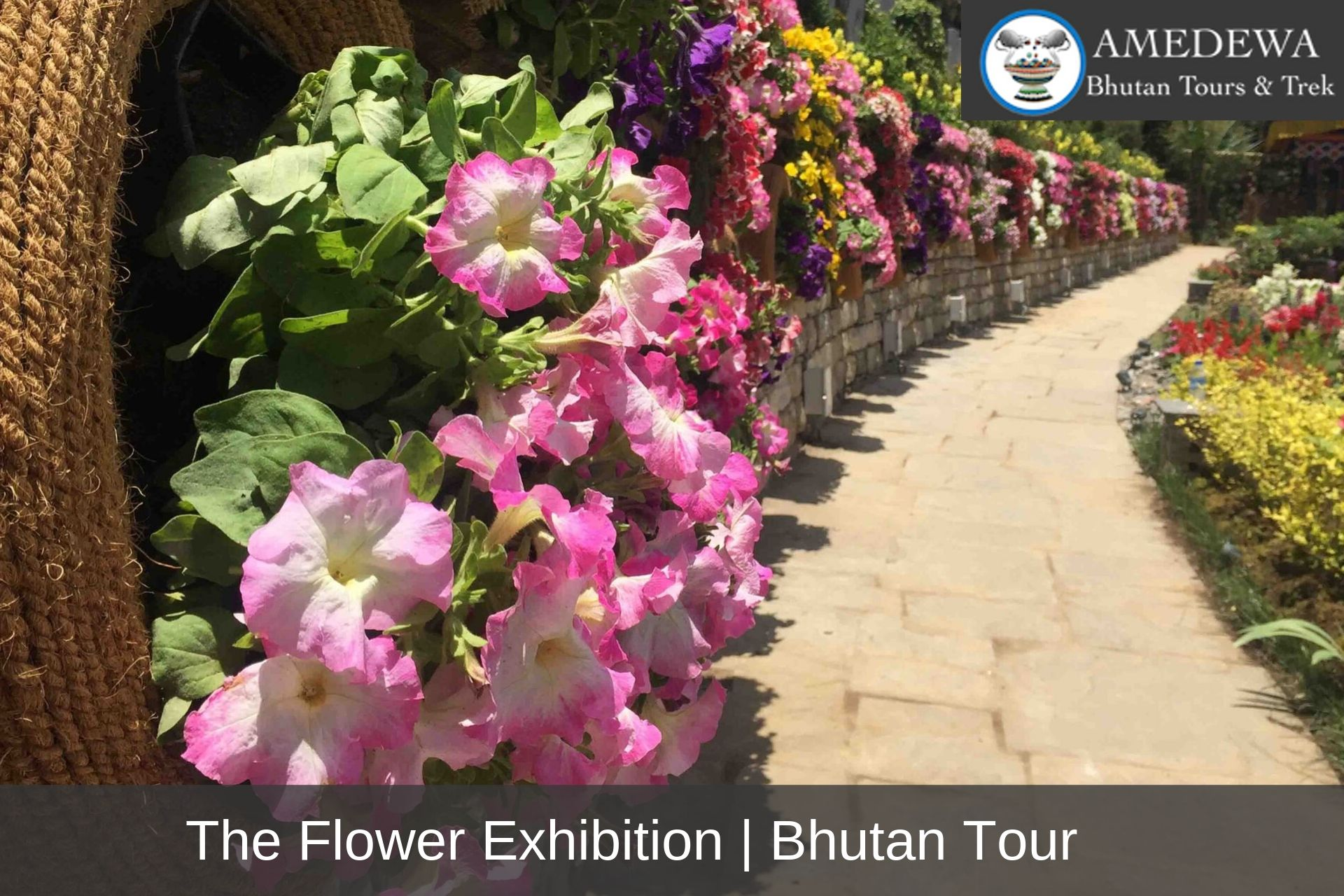 The Flower Exhibition - Amedewa Tours & Trek